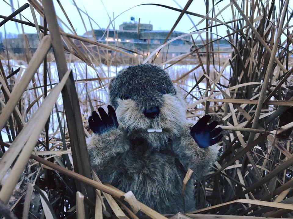 Manitoba Merv predicts early spring