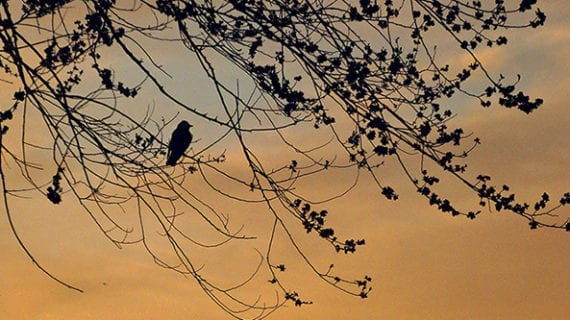 How to take stunning silhouette photos in the wild