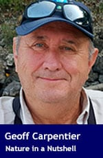 Geoff Carpentier