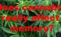 Does cannabis really affect memory? Here's what research currentlysays