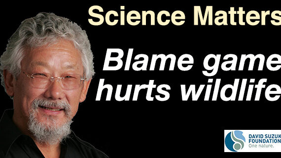 Blame game hurts wildlife