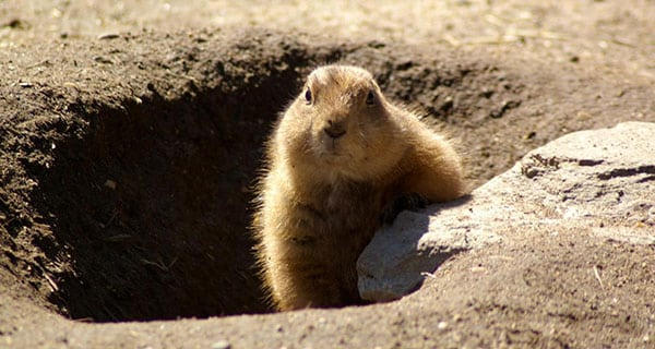 Groundhog Day, Trans Mountain pipeline style
