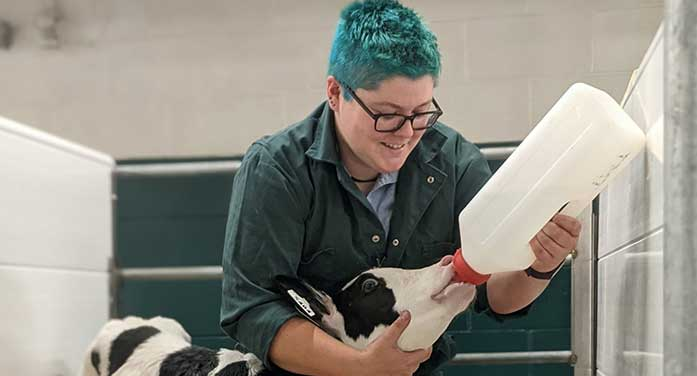 Researcher aims to buy more time for dairy calves to absorb vital antibodies